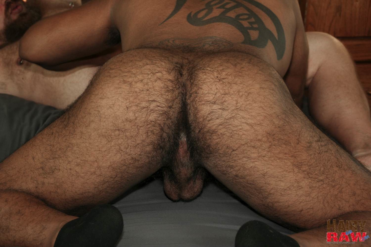 bear bareback gay Amature